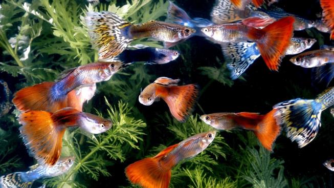 Začínáme s akvaristikou: Ryby pro začátečníky
