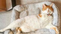 Kočka z kalendáře