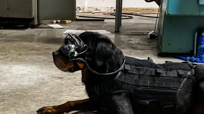Armádní psi možná dostanou speciální brýle. Uvidí v nich pokyny psovoda