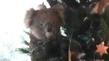 Vánoční koala