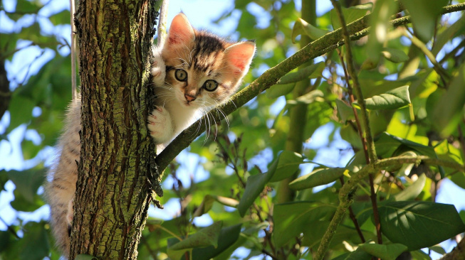 Kotě: Vývoj od šesti do dvanácti týdnů