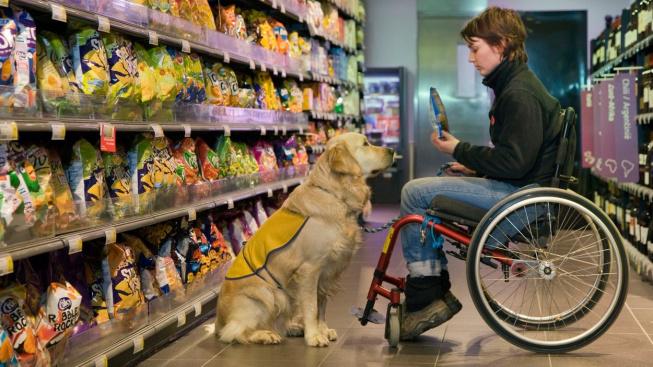 Asistenční psi: Převedou přes silnici, ale poznají i blízký epileptický záchvat