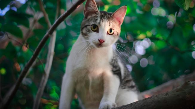 Kotě: Vývoj od tří do šesti měsíců a kočičí puberta