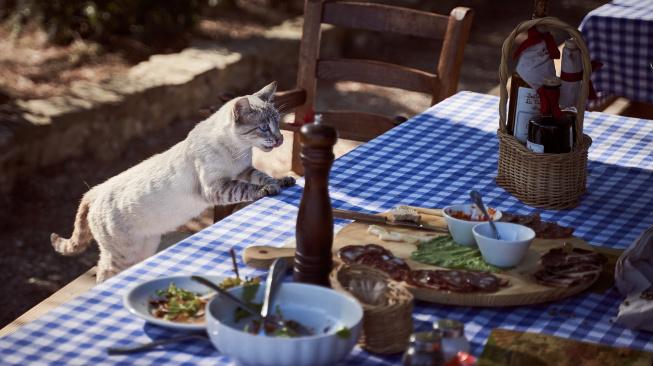 Mají kočky opravdu mlsné jazýčky?