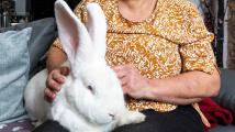 Obří králík Jester