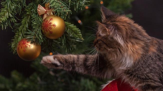 Jak na bezpečné a klidné Vánoce s kočkou