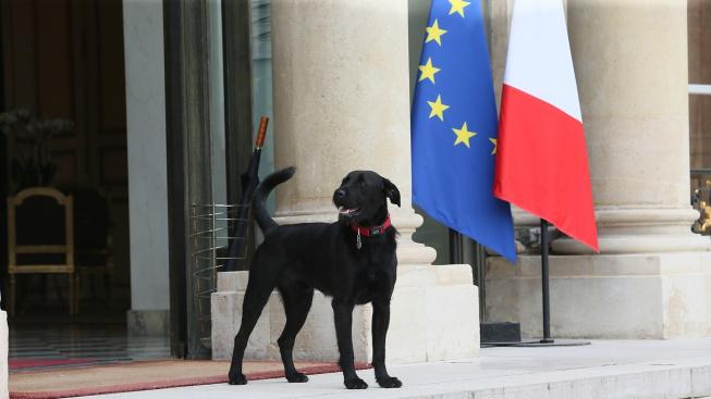 Adoptujte, ale myslete u toho, hlásá Macronův pes