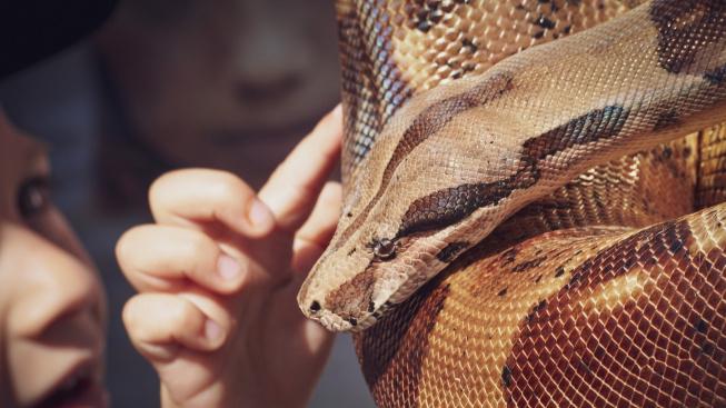 Jsou hadi skutečně hluší?