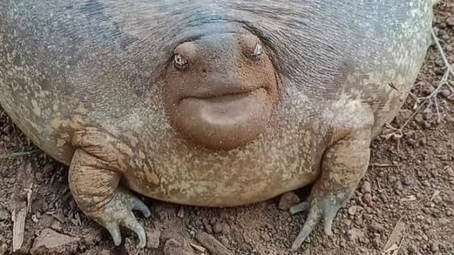 Muž našel podivné stvoření - vypadá jako žába, ale tváří se jako želva