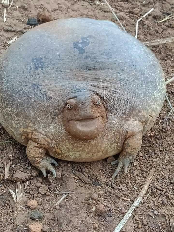 Žába, nebo želva?