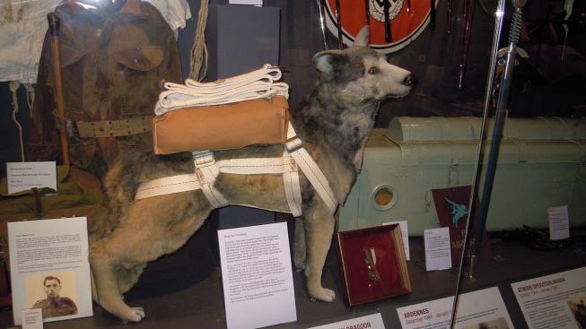 Bing – pes parašutista, který pomáhal při vylodění v Normandii