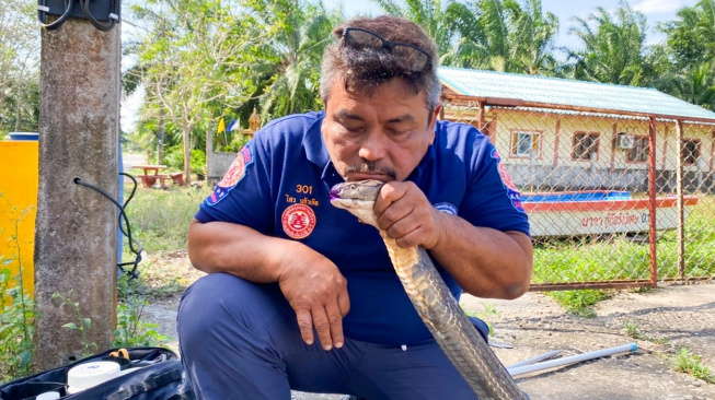 Hadí záchranář uzdravil už tři stovky jedovatých hadů. Bez jediného uštknutí