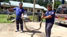 Hadí záchranář