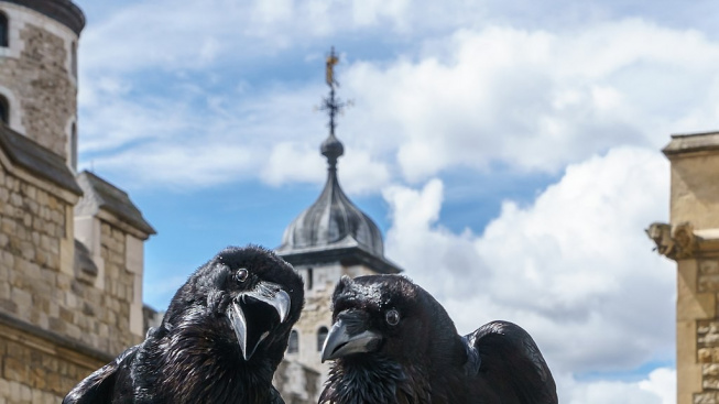 1024px-Jubilee_and_Munin,_Ravens,_Tower_of_London_2016-04-30
