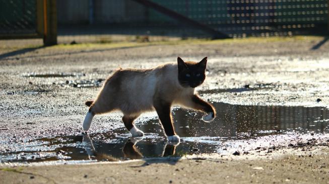 Proč kočky nesnáší vodu?