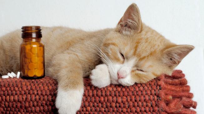 Lidské léky jsou pro kočky jed! Zabít může i jedna tabletka