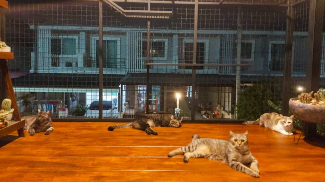 Kočičí ráj: Žena přestavěla dům, aby měly její kočky dokonalé pohodlí