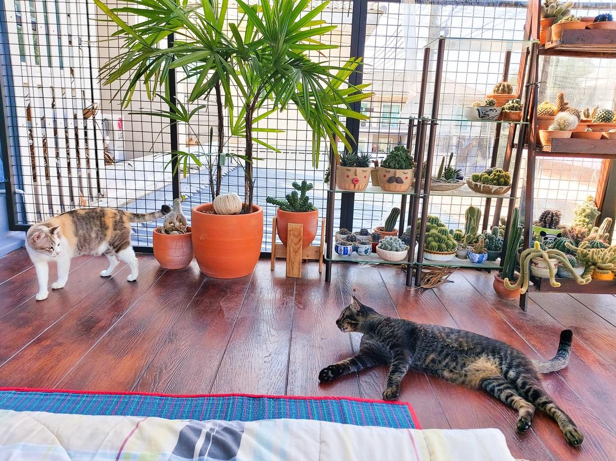 Kočičí dům snů