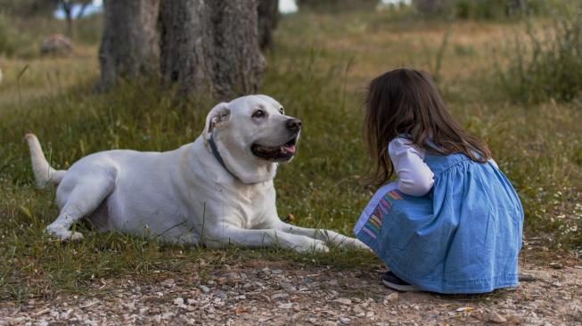 Psi vnímají 'své' děti a řídí se podle jejich chování