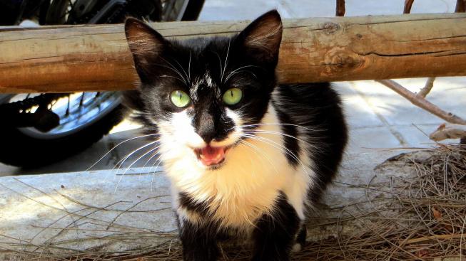 Zachráněný kocourek se ujal potulného kotěte a dal mu domov