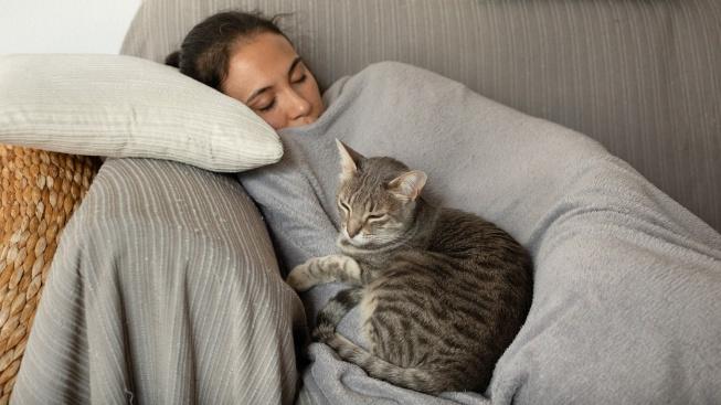 Proč na nás kočky tak rády usínají?