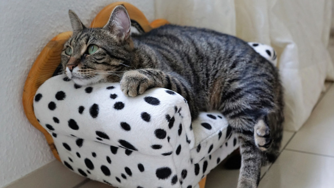 Co dělat, když kočka zvrací tekutiny