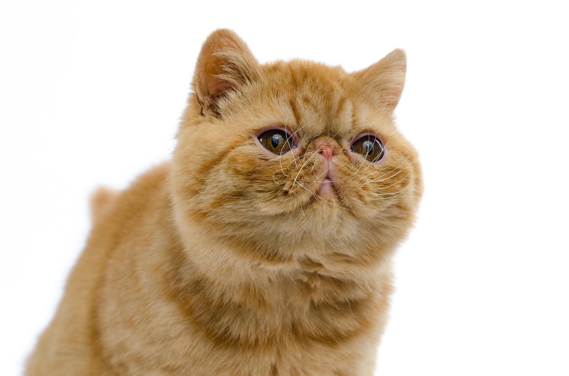 cat-4343862_1920