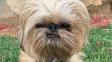 OBRAZEM: Roztomilý psík s výrazem jako masový vrah
