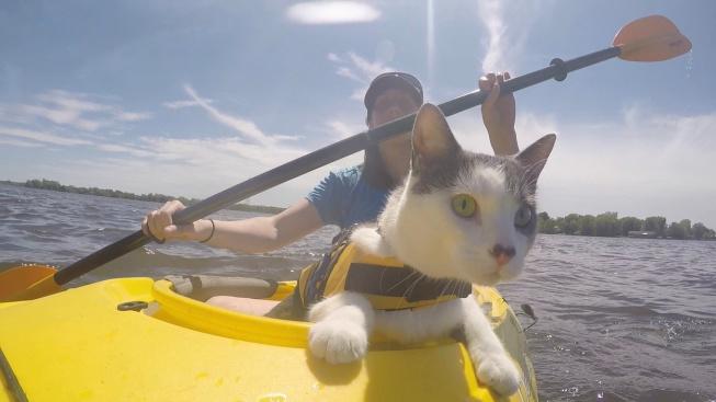 OBRAZEM: Odvážný kocourek se dobrodružství nebojí. A to ani na vodě