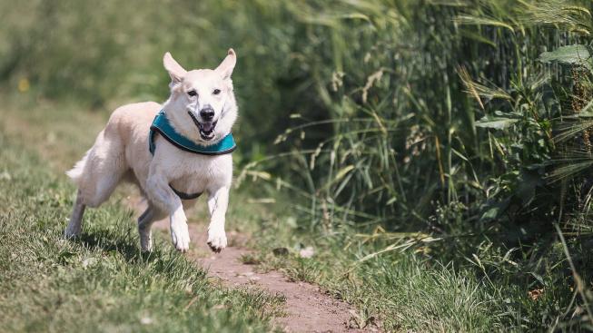 Ataxie aneb Když se psovi motají nohy