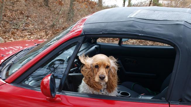 Jak na cestovní nevolnost u psů