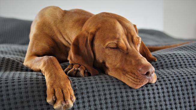 Kdy je psí chrápání ještě v normě?