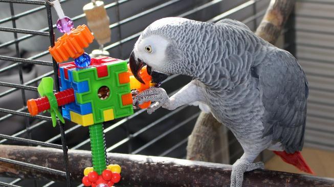 Pět tipů na jednoduché ptačí hračky