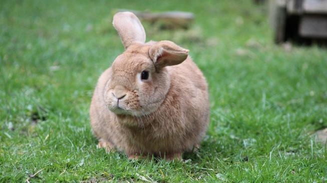 Když králíka trápí svědění