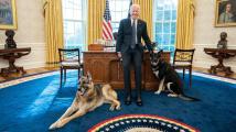 Bidenovi psi