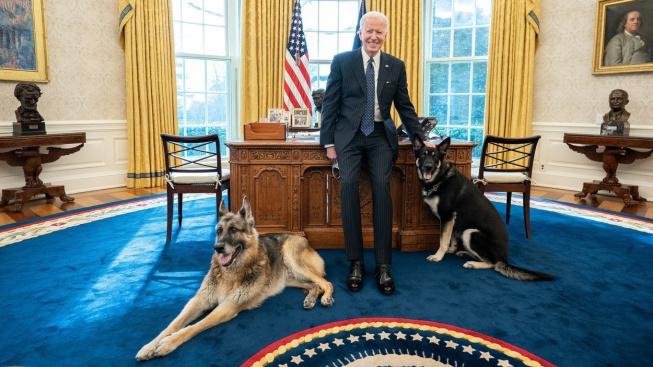 Bidenův ovčák pokousal ochranku. Psi musí z Bílého domu, prý jen dočasně