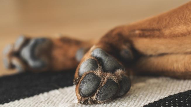 Že jsou psi špinaví? Omyl. Psí tlapky jsou čistší než podrážky bot