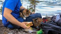Kočičí cestovatelky