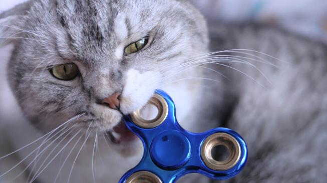 Proč kočky žvýkají předměty a jak tomu bránit?
