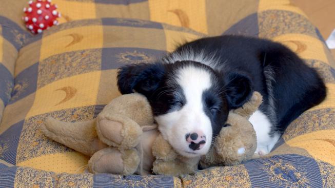 Jarní úklid psích potřeb: Nezapomeňte vyprat pelíšek i vodítko