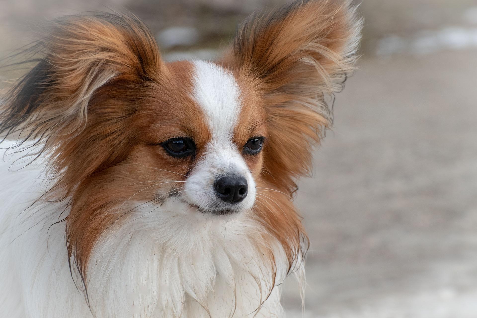 dog-3985784_1920