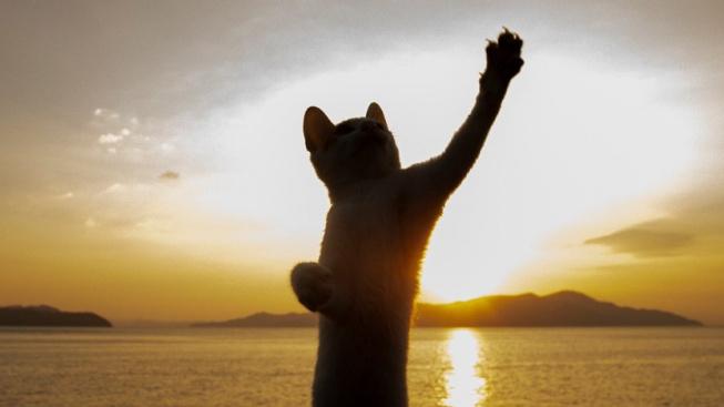 OBRAZEM: Toulavé kočky, jak je neznáte. Ladně tančí v ulicích