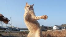 Kočičí tanečnice