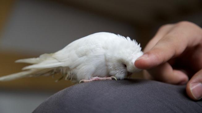 Jak na nechtěné chování papouška