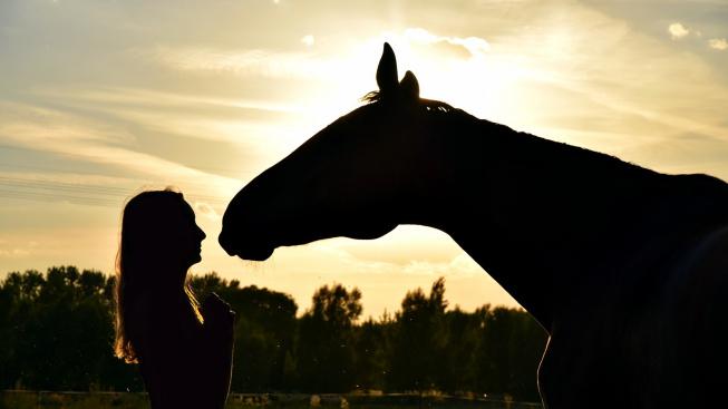 Mluvte na koně jako na malé děti, budou vás lépe vnímat, radí vědci