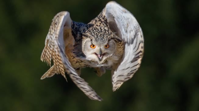 OBRAZEM: Ptáci mají svátek! Podívejte se, které můžete vidět v české přírodě