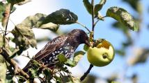 Čeští ptáci