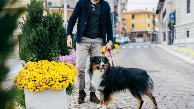 Naše životní prostředí má vliv na plodnost lidí i psů