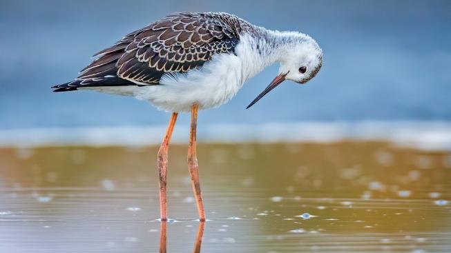 Jezero jako zrcadlo. Zlákalo k obdivu svého vzhledu i mladého ptáka?