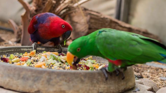 Má váš papoušek dostatek vápníku?